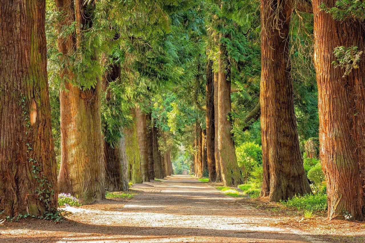 přírodní cesta